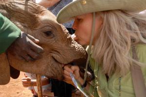 Lori-Elephant